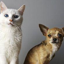 Lerretsbilde - Duo of Cat and Dog