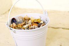 Mini Fragrant Seashells - Bulk Buy