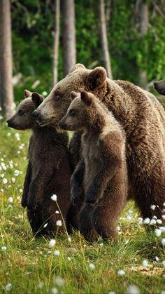 24 марта - день пробуждения медведя! | OK.RU Animals And Pets, Baby Animals, Funny Animals, Cute Animals, Baby Pandas, Wild Animals, Bear Pictures, Cute Animal Pictures, Love Bear