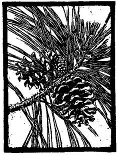 Ponderosa pine silhouette loft library pinterest for Ponderosa pine tattoo