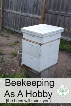 Pick up beekeeping as a hobby and the bees will thank you!  Help save the bees and get a great garden harvest at the same time! The Homesteading Hippy via @homesteadhippy