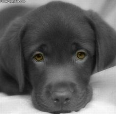 sweet....How precious