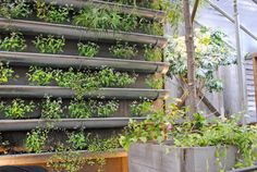 As long as you've got a blank wall or a bare fence, you can tend edibles, annuals, even perennials with these vertical gardening ideas.