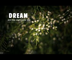 Dream and they might come true