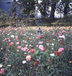 Cecil Beaton house, Reddish. Sotheybys copyright. Gardenista