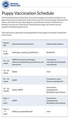 AKC vaccination schedules Pug Puppies, Chihuahuas, Puppy Schedule, Aussies, Cabin Ideas, Shih Tzu, Dog Stuff, Dachshund, Chihuahua