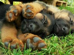 LOOK AT THOSE PAWS!  They are adorably huge!