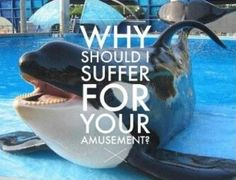 HELP STOP THIS MADNESS BY JOINING MY BOARD: Seaworld-The Truth, DONT JUST KEEP PINNING AFTER YOU SEE THIS, JOIN NOW! - Wildlife Earth