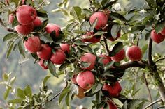 Must go apple picking soon. I need to put up some applesauce and apple butter!
