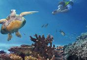 You can swim, snorkel, dive and sail the World Heritage-listed Great Barrier Reef, a living masterpiece so big it can be seen from outer space.