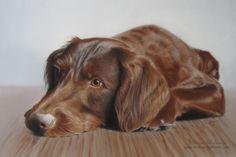"""Hundeportrait Mischling """"Sam"""", Pastellkreide - Tierportrait nach Fotovorlage von Simone Hofmann - www.simone-hofmann.com -  Dog painting"""