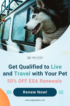 """Want to legally bring your pet everywhere you live and travel? You can with an ESA (Emotional Support Animal) Approval - Doctor Approved ESA Certifications from Real Doctors Sent Fast. - Rent and live with your pet anywhere, even if they have a """"No Pets"""" policy - Bring your pet in a taxi or on a train - Save money by eliminating costly pet deposits and fees. 100% Money Back Guarantee - 24-48 Hrs Delivery - 99% Acceptance. house pet, the dog, cat colors, sylvester the cat, pet sitter gifts Super Cute Puppies, Cute Dogs, Baby Animals Pictures, Animals And Pets, Baby Dogs, Dogs And Puppies, Dog Hiking Gear, Sylvester The Cat, Emotional Support Animal"""