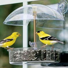 Buy Winner Window Bird Feeders at Brookstone. Order today!