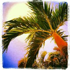 Something about a palm tree.