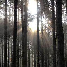 【ak1h1r00】さんのInstagramをピンしています。 《. . 2017/01/03(火) . 明け方の霧雨が幻想的な森の雰囲気を演出。 . これだから自然は面白い。 . #愛知県 #豊田市 #猿投山 #猿投山山頂 #今年2回目 #山頂気温4度 #森 #霧 #太陽 #朝 #自然 #山 #登山 #forest #fog #sun #morning #nature #mountain #trekking》