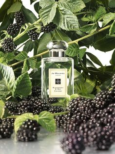 Jo Malone™ Blackberry & Bay Cologne