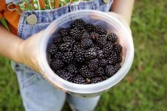 What to forage for now - how to choose wild food for your family Green Parent | Foraging frenzy