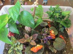 How Have We Connected the Dots Lately? We made a rainforest terrarium for Little Man who is interested in learning about the African rainforest. Teaching Activities, Hands On Activities, Toddler Activities, Teaching Ideas, Rainforest Activities, Rainforest Theme, Montessori Trays, Montessori Toddler, African Rainforest