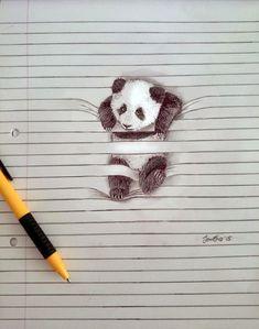 righe-panda