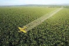 Gene-silencing spray lets us modify plants without changing DNA