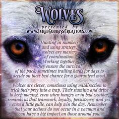 ~ Wolves ~ Wolves are linked with feelings of trust. A wolf appearing in an upsetting dream can mean you need to recognize a source of coercion in your waking life. Likewise, a wolf in a serene dream is urging you to trust more fully. Animal Spirit Guides, Wolf Spirit Animal, Animal Totems, Animal Sculptures, Pagan Quotes, Animal Meanings, Native American Spirituality, Wiccan Art, Animal Medicine