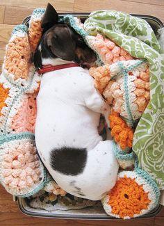 Sleeping Sweetness