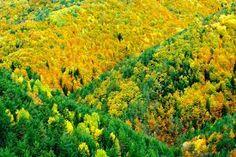 El roble es la especie dominante en las zonas más cálidas. Suele ocupar las grandes llanuras y el piso basal de las montañas. El haya, que exige mayor humedad atmosférica, predomina en el piso montano y en las llanuras más húmedas, y prefiere el humus mull.