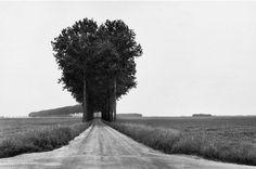 árvores mágicas 29 árvores podem ser tão mágico (35 fotos)