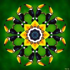 http://mandalapoesia.blogspot.com.br/