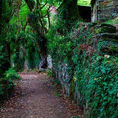 Tramo del Camino de Santiago en Galicia 👣👣👣