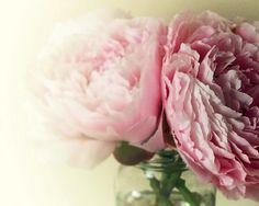 peony pink {ghettojack @Tony Wang} #pink