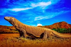 Komodo National Park, in East Nusa Tenggara, which recognized UNESCO in 1991