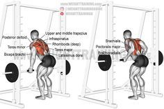 Smith machine underhand Yates row. A compound exercise. Target muscle: None; the back in general. See synergists. Synergists: Upper and Middle Trapezius, Rhomboids, Latissimus Dorsi, Teres Major, Posterior Deltoid, Infraspinatus, Teres Minor, Biceps Brachii, Brachialis, Brachioradialis, and Lower Pectoralis Major.