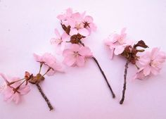 apple blossom drawing | Apple Blossoms, Island Flower, Natural Petal Collage, Soft Pink, 8 ...