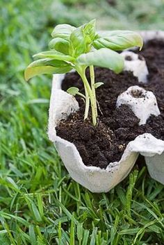 5 tips for greener gardening. Grow seedlings in an empty egg carton, then when ready to plant, just cut the individual segments and plant in the garden.