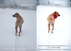 How to Take Photos in the Snow! {how to}