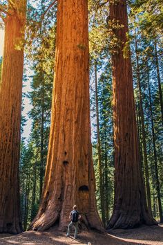 Take a day trip to see the giant sequoia trees at Merced Grove. #Jetsetter Hotel Charlotte (Groveland, California)