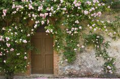 Fairytale Decor: 10 Climbing Roses That Add a Touch of Whimsy