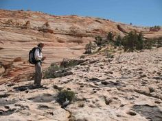"""Palaeontologists cast Doubt on """"Dinosaur Dance Floor"""" Discovery in Western USA"""