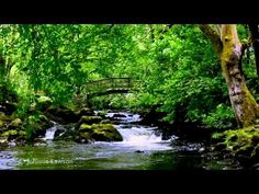 Relax 8 Hours-Relaxing Nature Sounds-Study-Sleep-Meditation-Water Sounds-Bird Song - YouTube