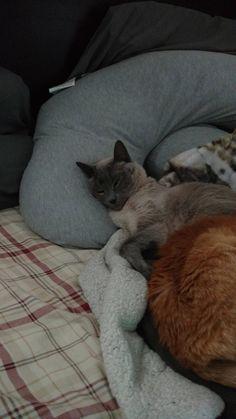 Cute cat sleeping http://ift.tt/2k8IVmc