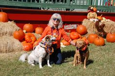 Our Top 3 Fall Activities with Dogs!