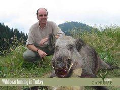 Wild boar hunting in Turkey Wild Boar Hunting, Nikon, Safari, Turkey, Animals, Animales, Turkey Country, Animaux, Animal