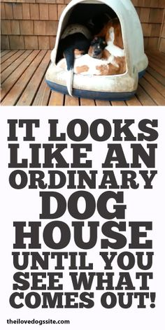 It Looks Like An Ordinary Dog House Until Your See What Comes Out!!