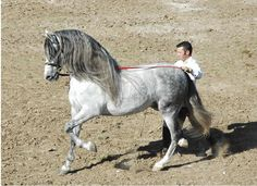 andalusian | Pin it 13 Like 6 Image