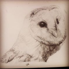 Barn Owl, by Ged Peter Lynn of Slakewater Creative, UK!