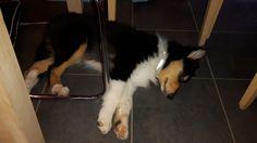 Beauty sleep Rough Collie Puppy, Collie Puppies, Sleeping Beauty, Corgi, Animals, Corgis, Animales, Border Collie Pups, Animaux