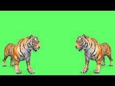 ग्रीन स्क्रीन वीडियो बनाने के तरीके आसान - YouTube Birthday Background Images, Iphone Background Images, Banner Background Images, Poster Background Design, Green Screen Images, Free Green Screen, Joker Iphone Wallpaper, Phone Wallpaper For Men, Green Background Video