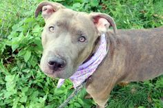 gone~~ LEXI - A1085327 - - Manhattan  Please Share:   TO BE DESTROYED 08/20/16 A…