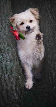 Cute Funny Animals, Funny Dogs, Cute Puppies, Cute Dogs, Dog Wallpaper, Heart Wallpaper, Lovely Creatures, Wolf, Cute Animal Pictures